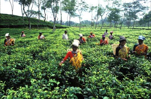 Bangladesh lieu de rencontre